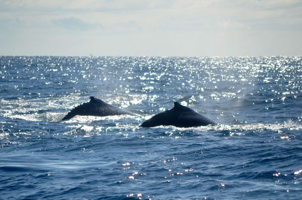 Whale-watching at Mooloolaba