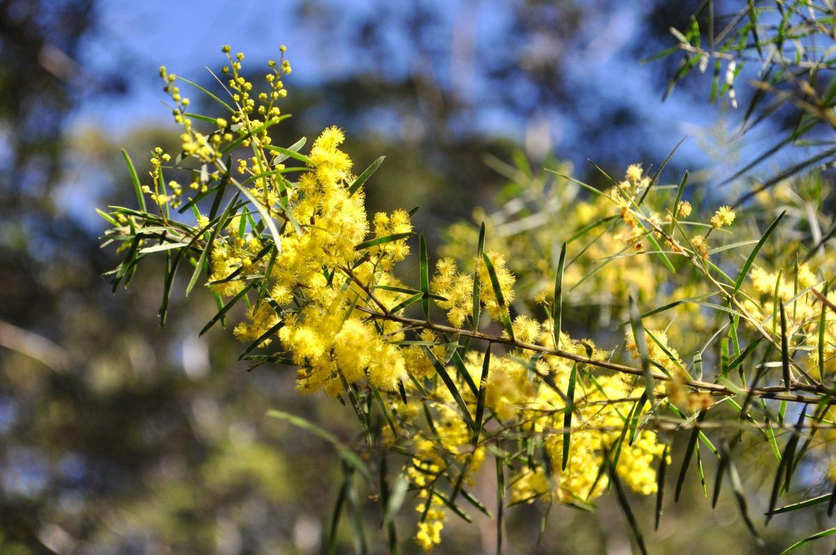 Maroochy Bushland BotanicGardens