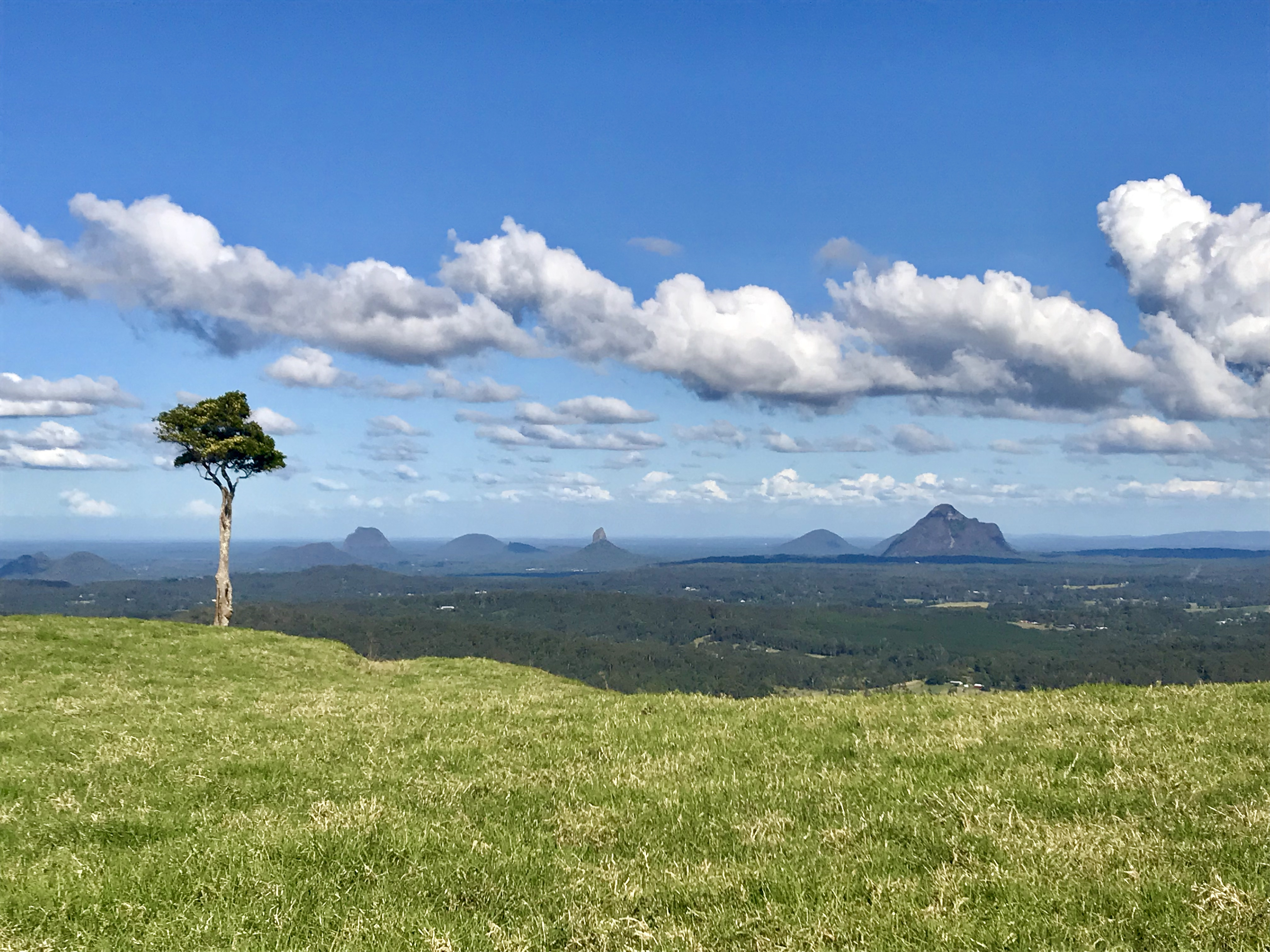 One Tree Hill, Maleny